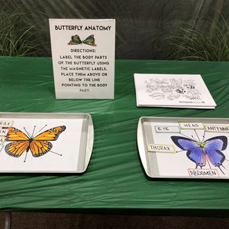 Butterfly anatomy game located in the 4-H & Youth Village