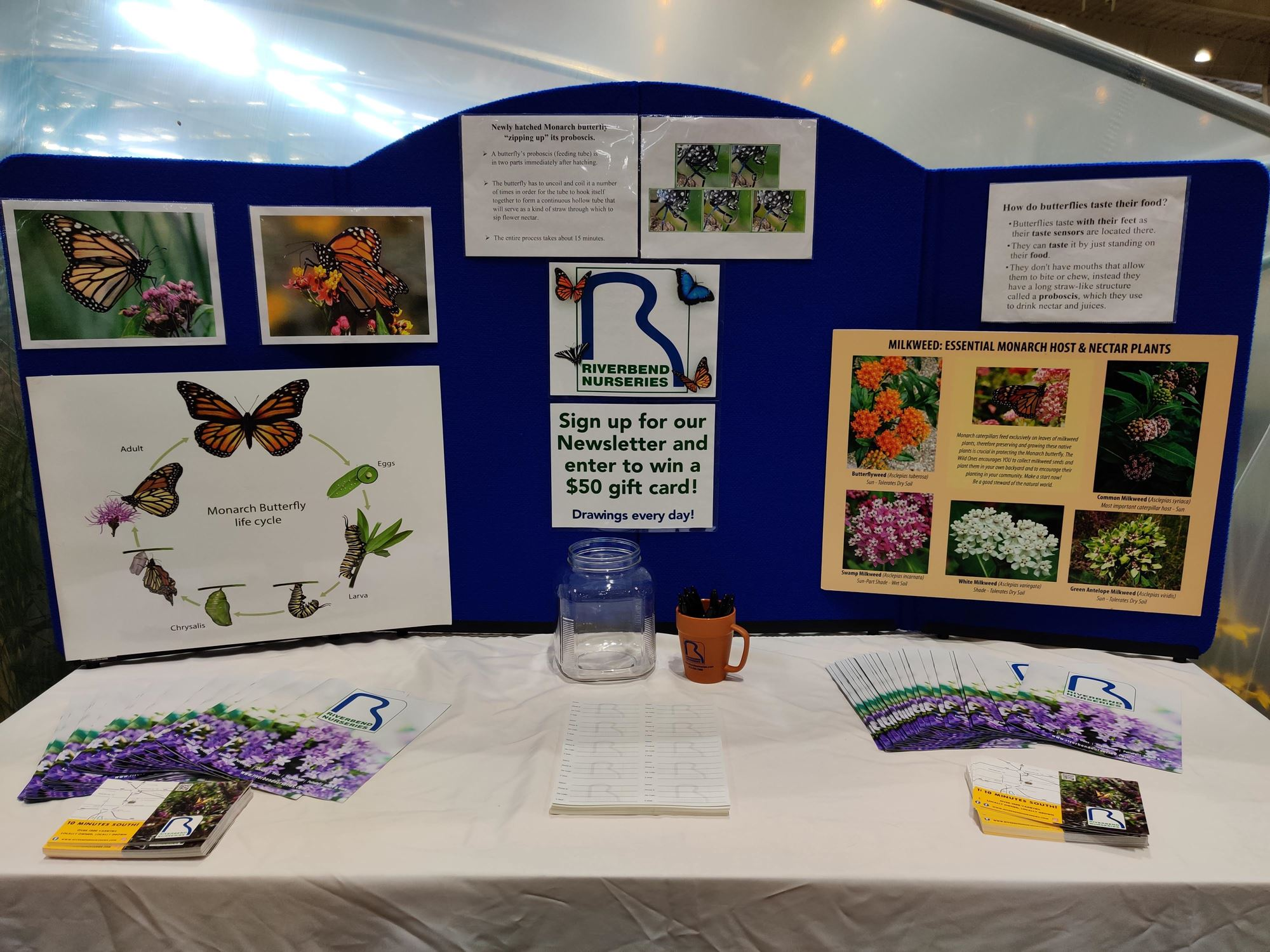 Education display about butterflies
