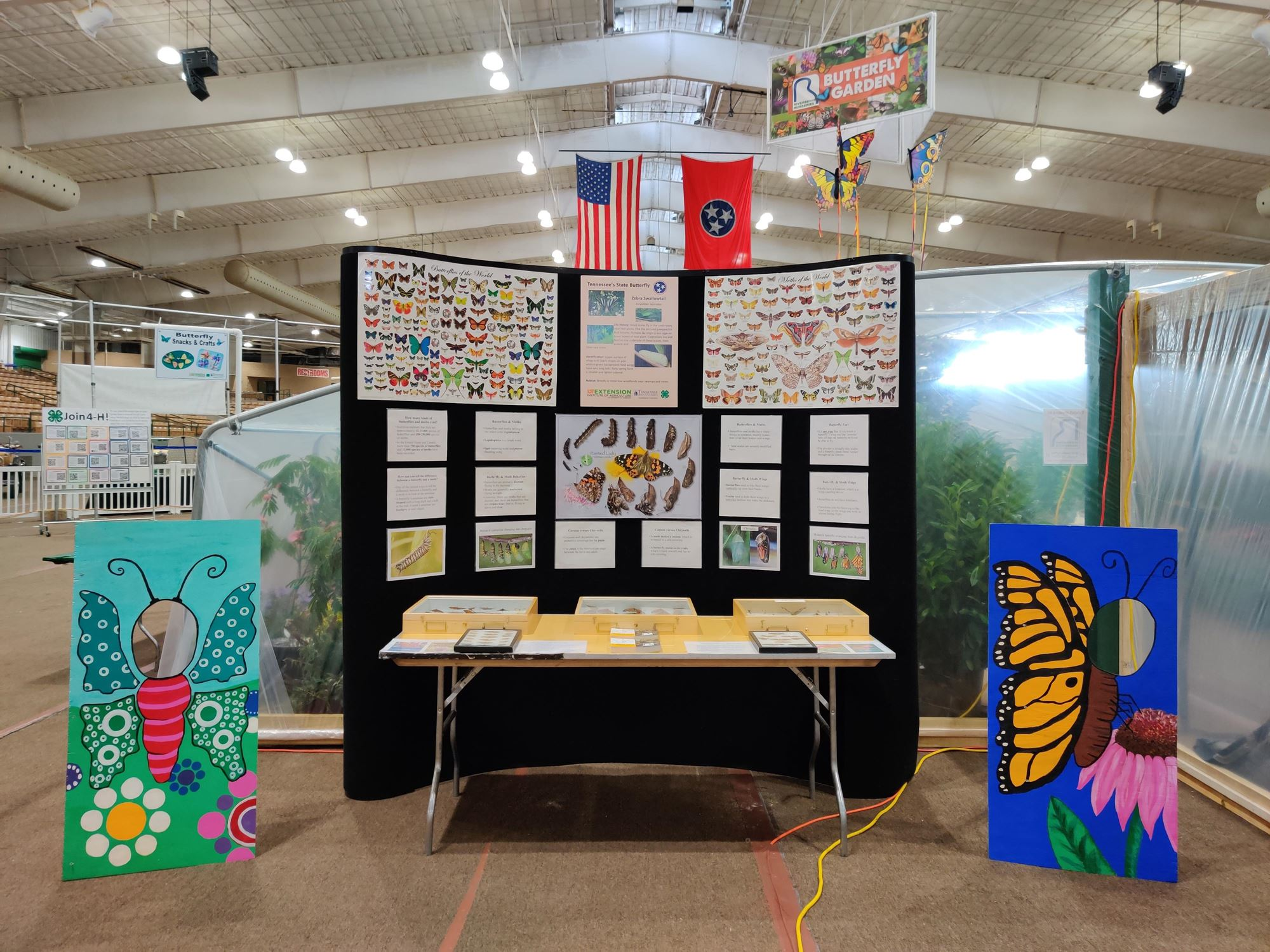 Educational display about butterflies
