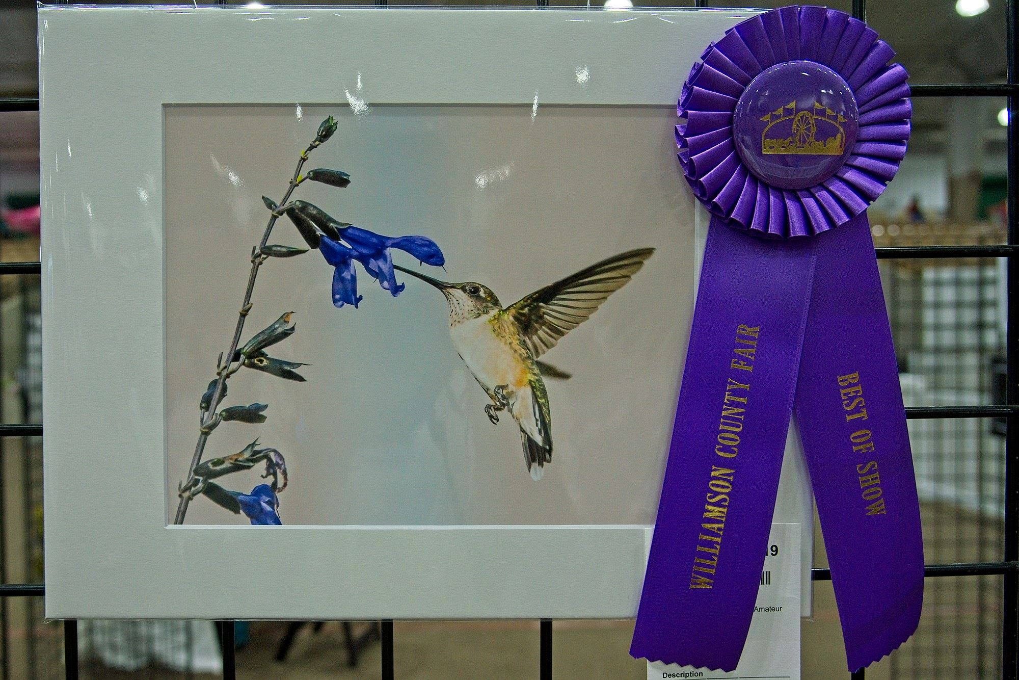 Best of Show photograph of a hummingbird with link to enter Cultural Arts divisions.