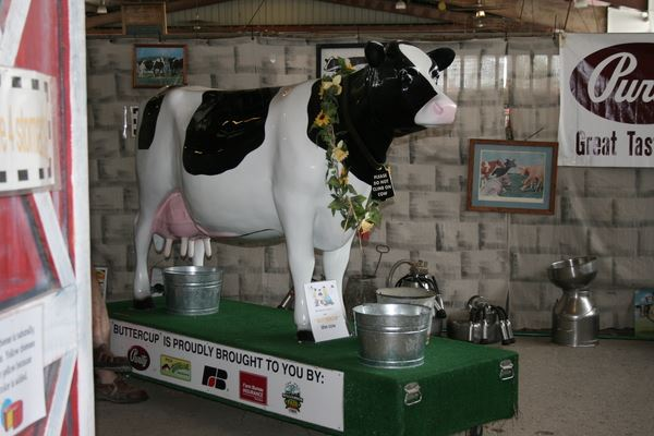 Buttercup the milking cow in Little 1's Farming