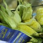 Home grown blue ribbon corn on the cob