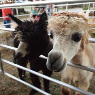 Wilson County Fair - 2012
