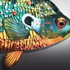 teal and orange fish
