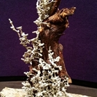 Aluminum Casting of Fire Ant colony built around tree root.