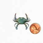 miniature painting of a blue crab