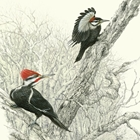 two woodpeckers sitting on a tree branch