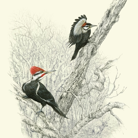 Gouache and pencil painting of two woodpeckers on a branch